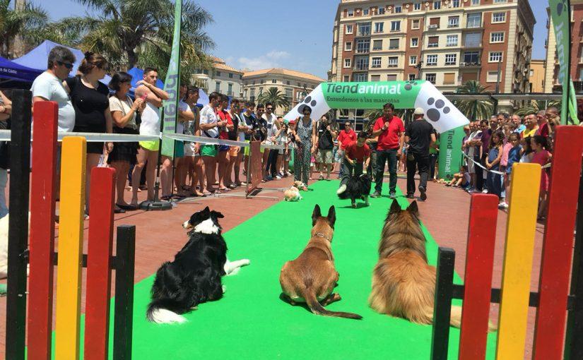 Malaga Dog Party regresa con desfiles, peluquería de perros, una carrera benéfica, música en vivo y mucho más.
